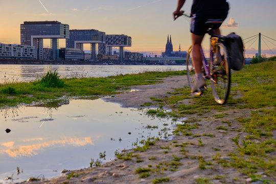 Am Flussufer in Köln am Rhein bei Sonnenuntergang mit Blick auf die Kölner Skyline mit den Kranhäusern, ein Radfahrer fährt neben einer Pfütze den Rhein bei den Poller Wiesen entlang.