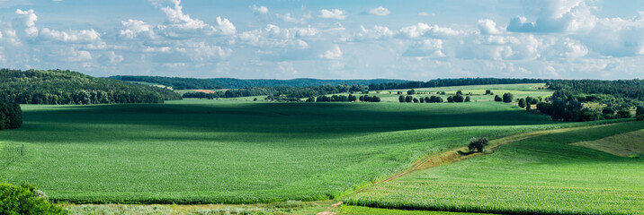 Panoramic view of fields with corn. Village Popovka, Cherkasy region, Ukraine
