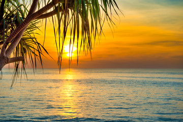 Photo sur Plexiglas Arbre Beautiful landscape with sunset at tropical beach with palm trees