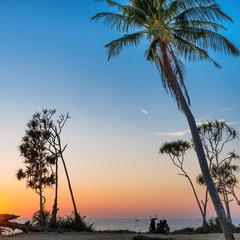 Palm tree and bike on tropical island beach at sunset