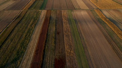 Wall Mural - Aerial view of colorful countryside agricultural field patchwork in autumn