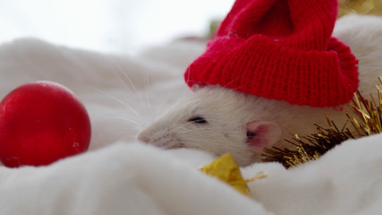 Christmas rats under the tree. New Year gifts. Year of the rat or mouse