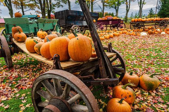various pumpkins at roadside display
