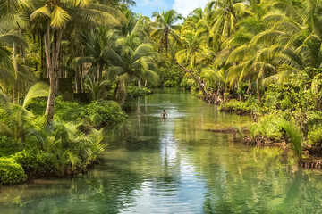 Children jumping from a palm tree in a river
