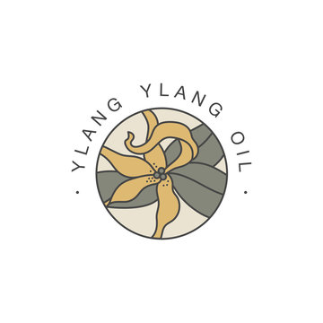 Vector design template and emblem - healthy and cosmetics oil. Ylang ylang natural, organic oil. Colorful logo in trendy linear style.