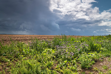Angry dark clouds looming over the Isle of Sheppy countryside during a period of unsettled weather, Kent, England