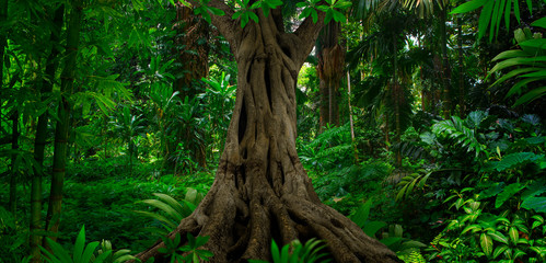 Asian tropical forest