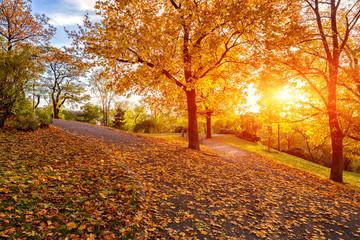 Autumn in Prague, beautiful sunny park on Vitkov hill, Zizkov district, Czech Republic, travel background Fototapete