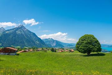 Landscape with Mount Niesen in Aeschi