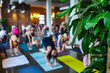 Diverse group of people in yoga class. A green plant is seen at the front of a gymnasium during a workshop honoring 108 rounds of surya namaskar, a traditional set of yogic poses, with copy-space
