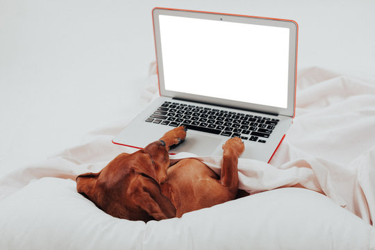 dog works on laptop