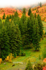 Autumn Fall Maple and Pine Trees Valley with Horses