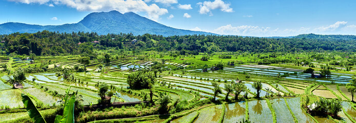 Bali Candidasa Rice Terraces field Indonesia panorama