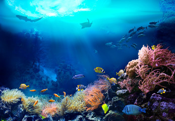 Photo Blinds Coral reefs Underwater view of the coral reef. Ecosystem. Life in tropical waters.
