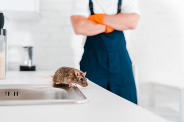 selective focus of small rat near sink and man with crossed arms