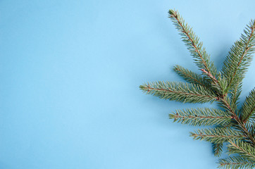 On a blue background in the right corner lies one branch of spruce. Flat lay
