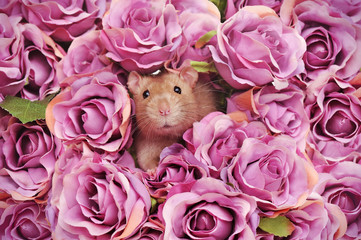 Card with rat in pink roses bouquet background