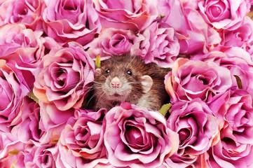 Decorative rat in pink roses frame