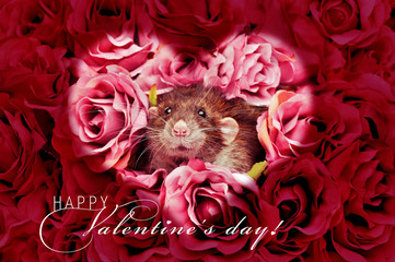 Saint Valentine's greeting card with rat in roses bouquet