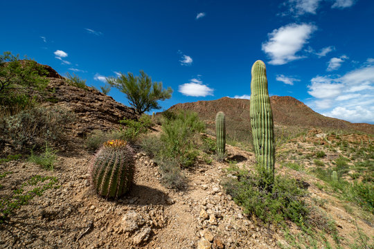 Desert mountains valley and saguaro cactus and barrel cactus and mesquite with blue sky and clouds in Tucson, Arizona