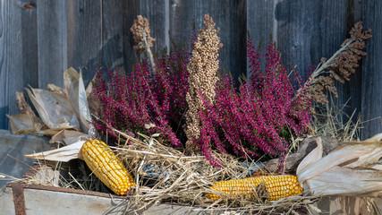 Herbstdekoration mit Maiskolben und Heidekraut