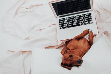 dog works on laptop- Image