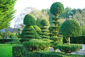 topiary yew and buxus trees