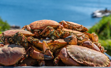 Cooked brown crabs on a tray ready to be eaten (Cancer pagurus).