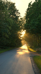 Sunbeams at the end of a road and many trees
