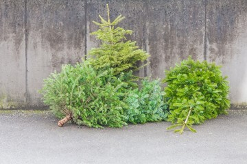 Traditional green christmas trees firs on street at xmas season. The x-mas trees waiting for buyers on sale before christmas holiday or after x-mas time for disposal recycling reasons in new year
