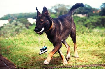 cachorro - sapatinho