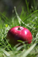 Roter Apfel im Gras