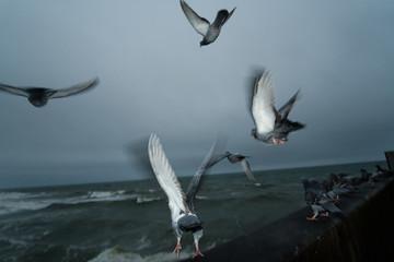 Birds Take Flight at Dawn