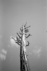 A lone tree with small branches rises up into the sky