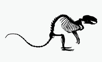 skeleton of the rat vector illustration