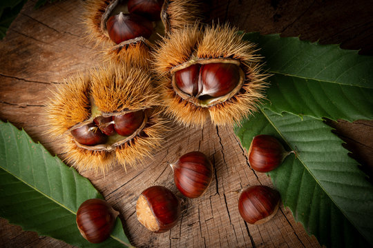 Sweet Chestnuts - Castanea sativa on an old wooden table