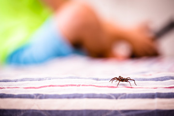 poisonous spider near a child, brown spider walking on the bed, arachnophobia concept, fear of the spider. Spider Bite.