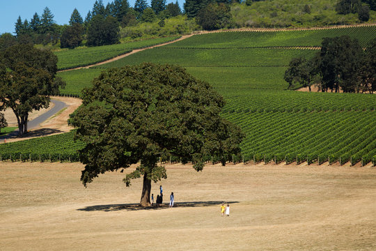 Two young girls in summer dresses holding hands walking near rows of wine grapes at a Willamette Valley winery.