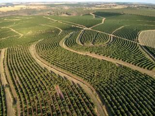 aerial viewof green coffee field in Brazil Fotoväggar