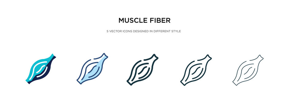 muscle fiber icon in different style vector illustration. two colored and black muscle fiber vector icons designed in filled, outline, line and stroke style can be used for web, mobile, ui
