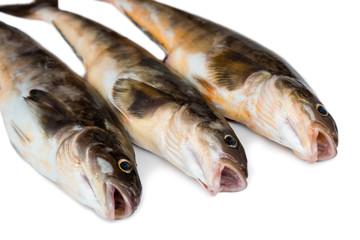 Fresh sea fish Arabesque greenling bass