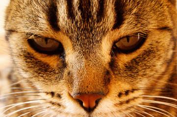 Gato molesto por la foto