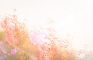 Beautiful meadow and sky autumn sunrise background