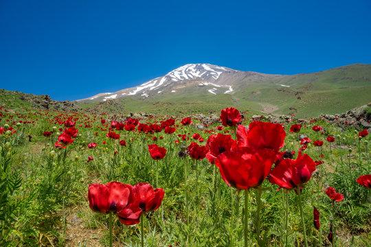 Mount Damavand 5.671 m (Iran)