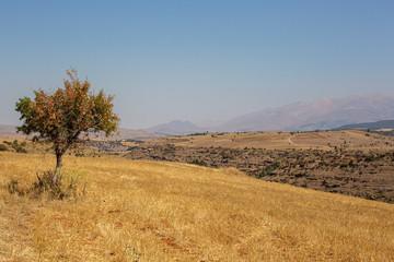 dead tree in the field