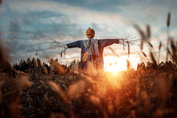Scary scarecrow with a halloween pumpkin head in a field at sunset. Halloween background, copy space.