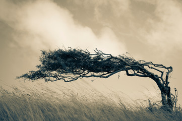 Wall Murals Beige Resilient Lone Tree Bends in the Wind