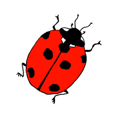 Lady bug. Line art doodle sketch. Colorful outline on white background. Picture can be used in greeting cards, posters, flyers, banners, logo, botanical design etc. Vector illustration. EPS10