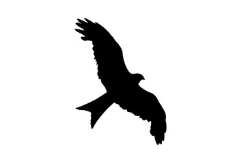 Red Kite rapture black silhouette cut out and isolated on a white background Fotomurales