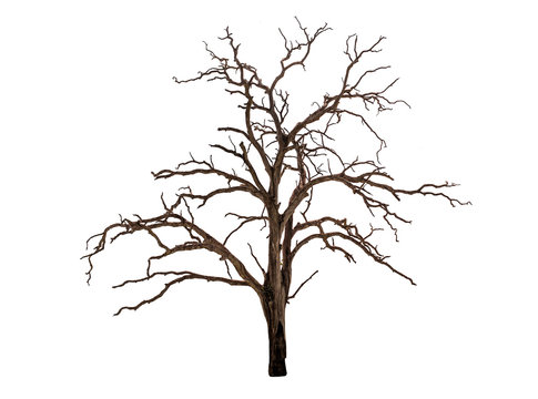 dead bare tree on white